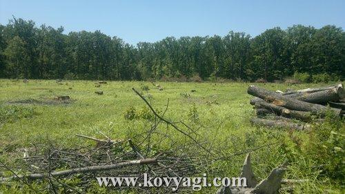 10 лет лесники вырубают местный лес